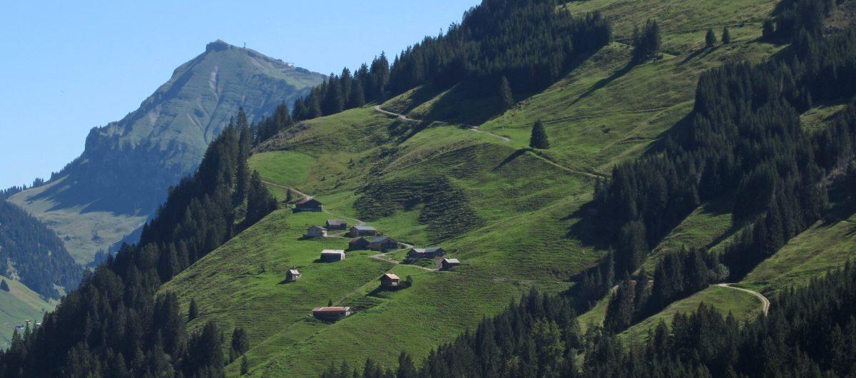 Diedamskopf und Alpe im Hochsommer bregenzerwald hotel krone au