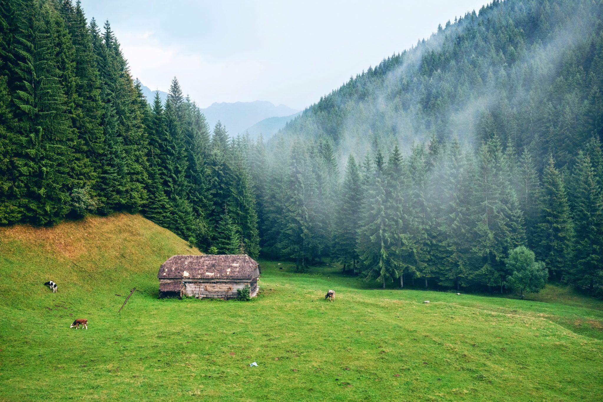 Bergurlaub Bregenzerwald Natur Hotel Krone Au